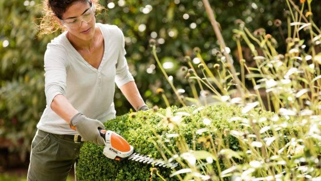 Plataforma Pró Jardim, da Stihl terá módulos sobre jardinagem para capacitar profissionais e apaixonados por plantas.