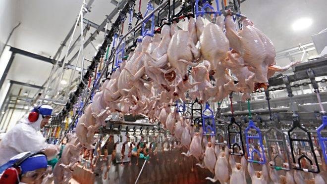 Exportação da carne de frango também cresce mesmo durante a pandemia