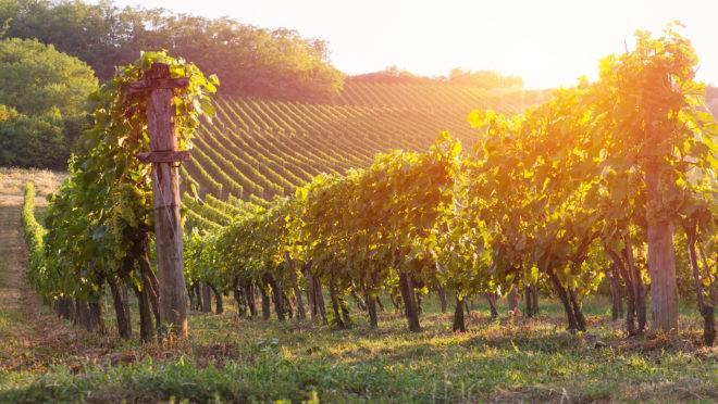 A importância da natureza na concepção de vinhos inesquecíveis