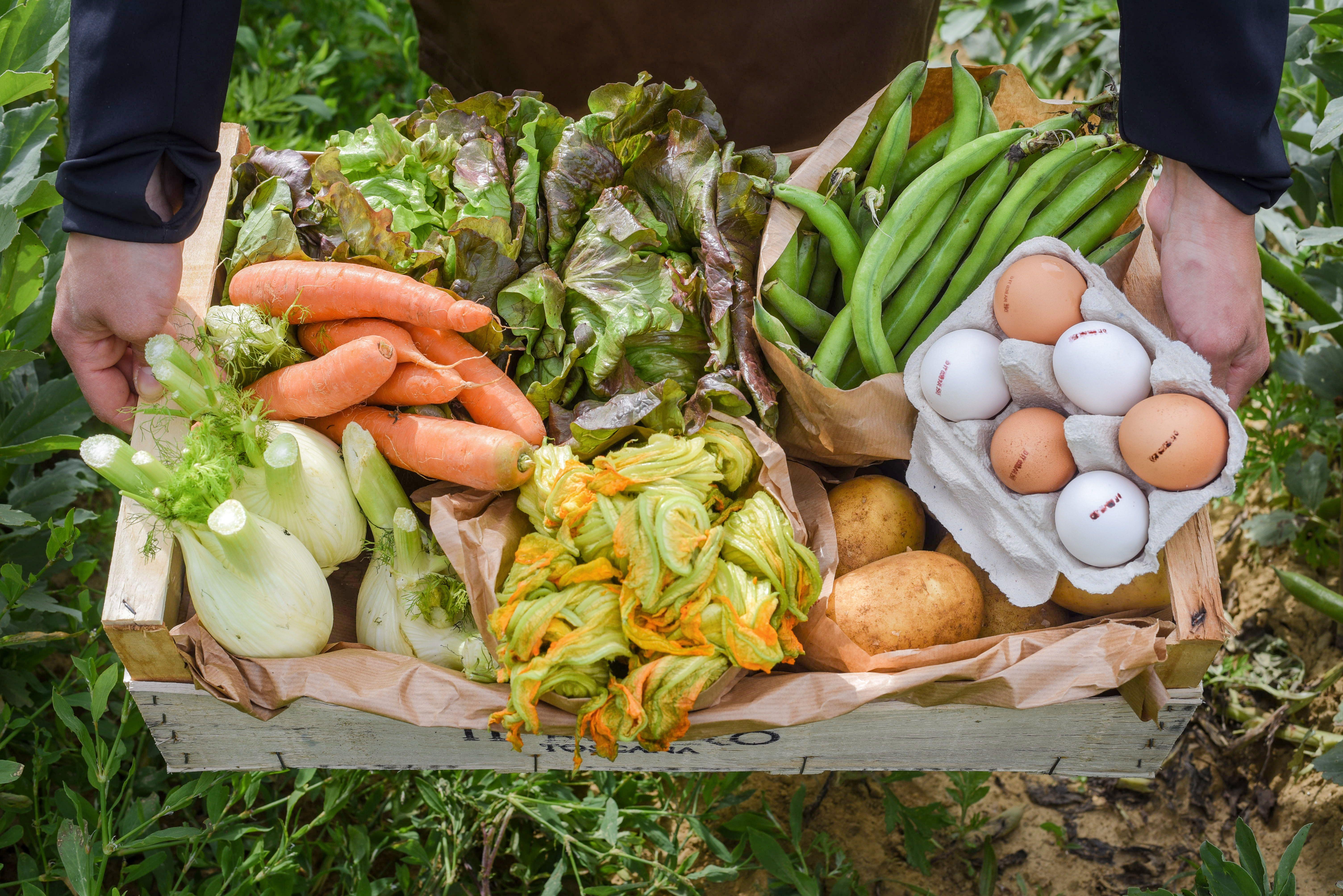 Desde maio, a horta do Borro passou a vender cestas de frutas e verduras produzidas na propriedade dos Ferragamo