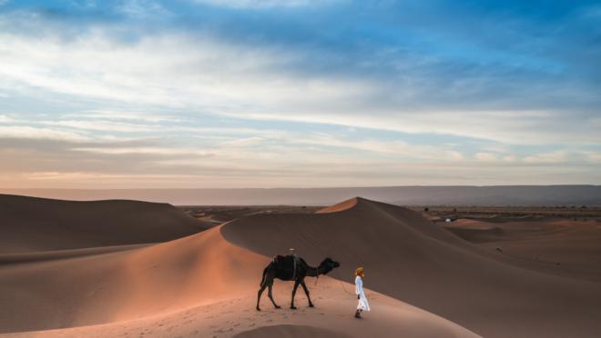 Diferentemente dos unicórnios, startups camelo resistem às mais duras crises.