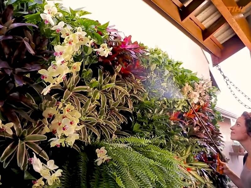 Foto: Carol Costa/Minhas Plantas