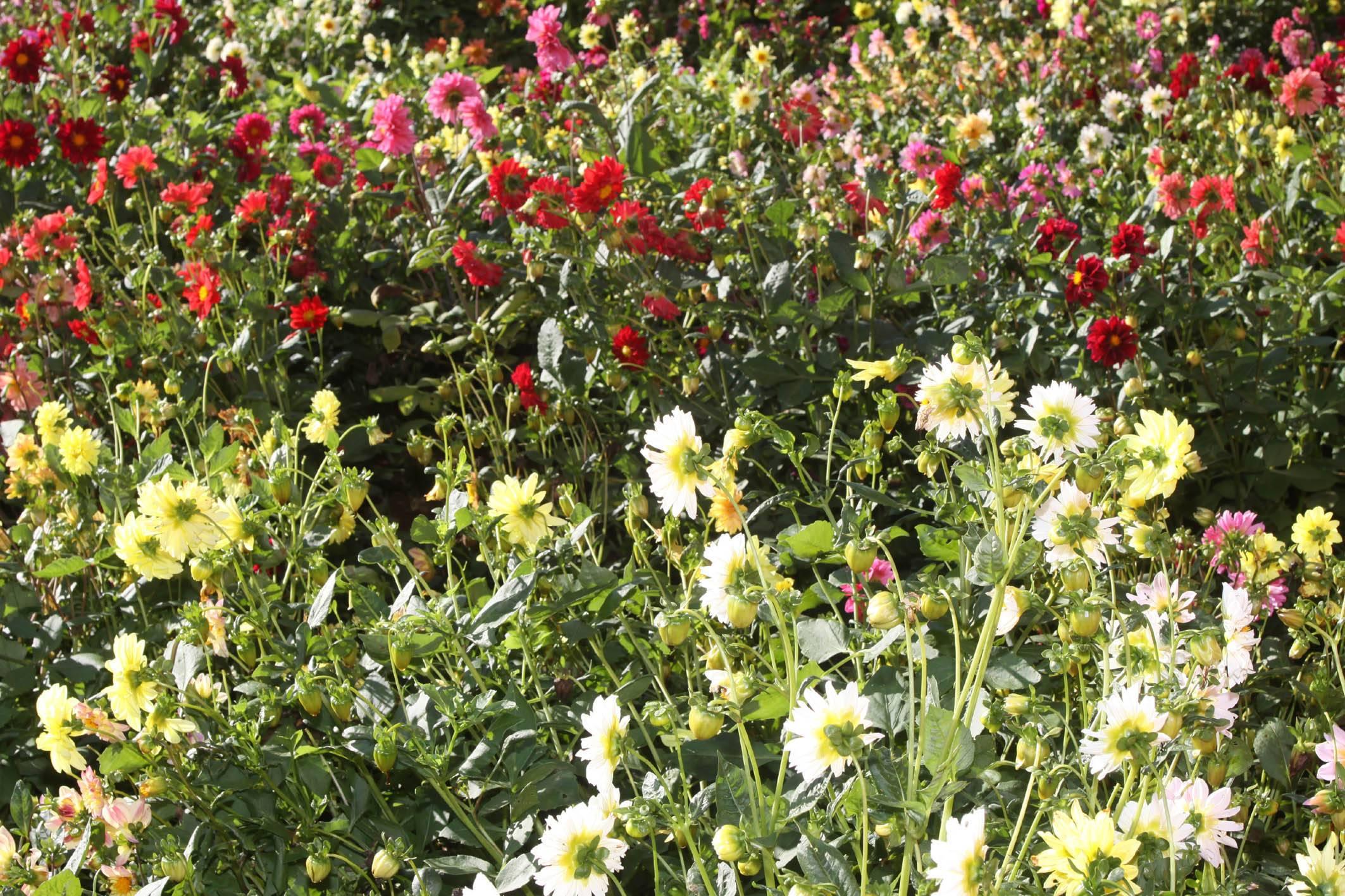 No Paraná, a floricultura está presente em 108 municípios, envolvendo aproximadamente 900 agricultores.