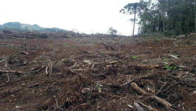 Desmatamento no Paraná está concentrado em algumas regiões onde há forte remanescente de Mata Atlântica