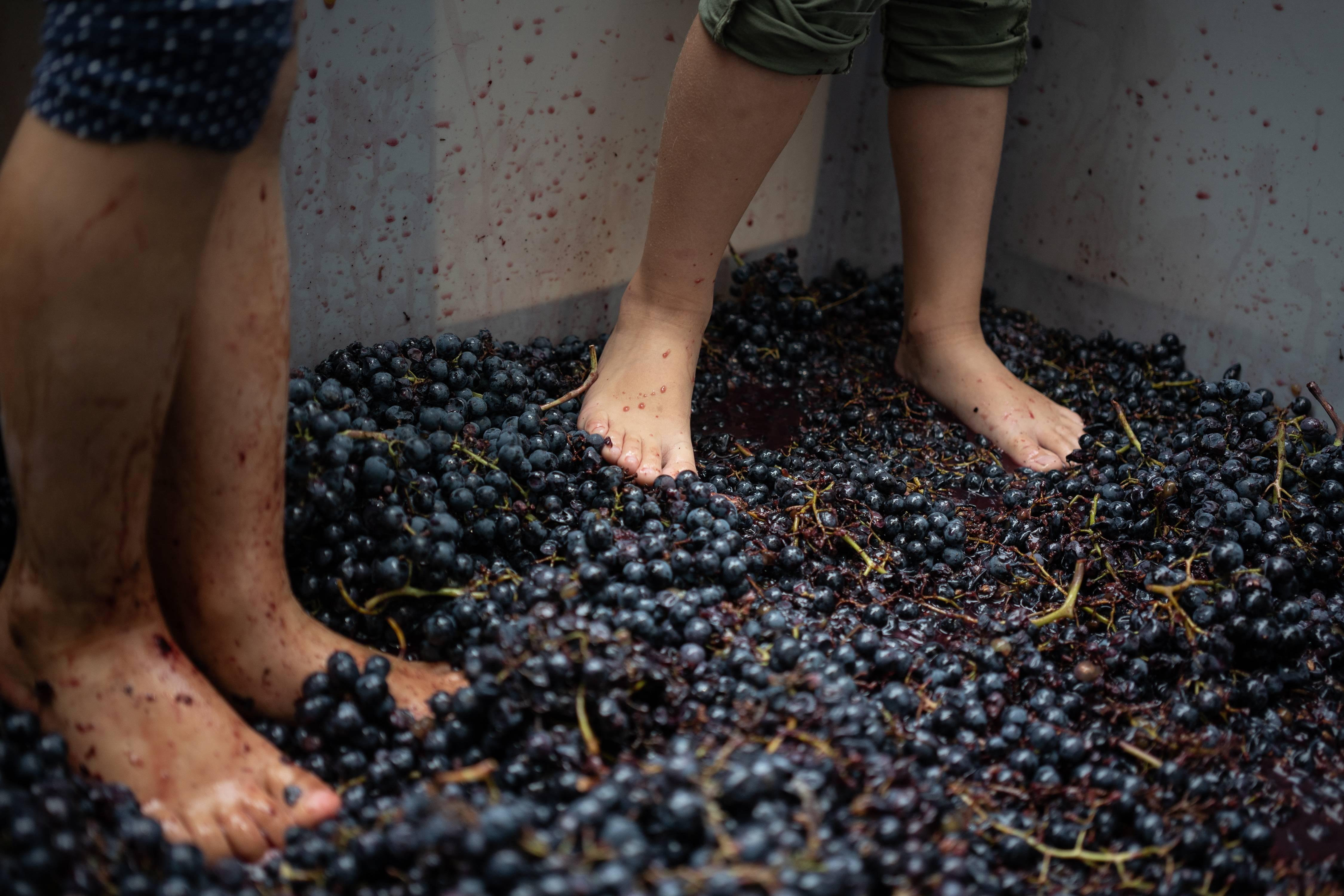 Atividades Semana do Vinho