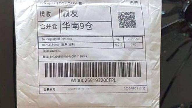 Sementes chegaram em uma encomenda vinda da China na casa de uma moradora de Curitiba, sem terem sido solicitadas