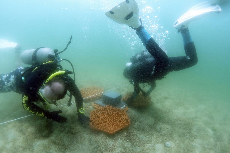 Mergulhadores instalando as estruturas de recuperação dos recifes. Fotos: Christian J. Lange/Vriko Yu/AFCD/Phil Thompson