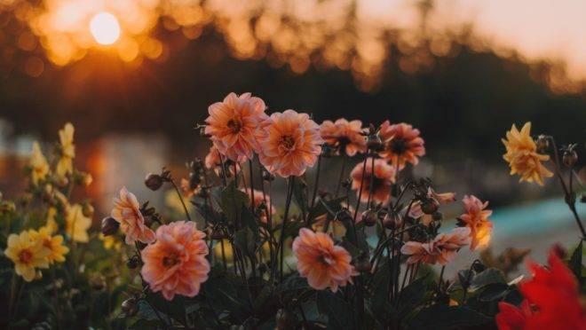 A primaveira inspira as pessoas a tomarem para si a beleza dessa época do ano, traduzindo-a em belas palavras.