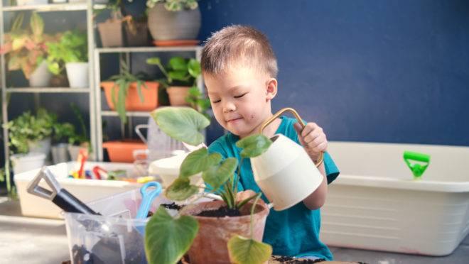 Cuidar de plantas é uma atividade que envolve a família toda. Siga algumas dicas e inclua mais verde em casa.