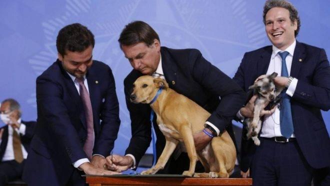 Bolsonaro sanciona aumento de pena por maus-tratos a cães e gatos