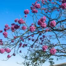 Primavera: