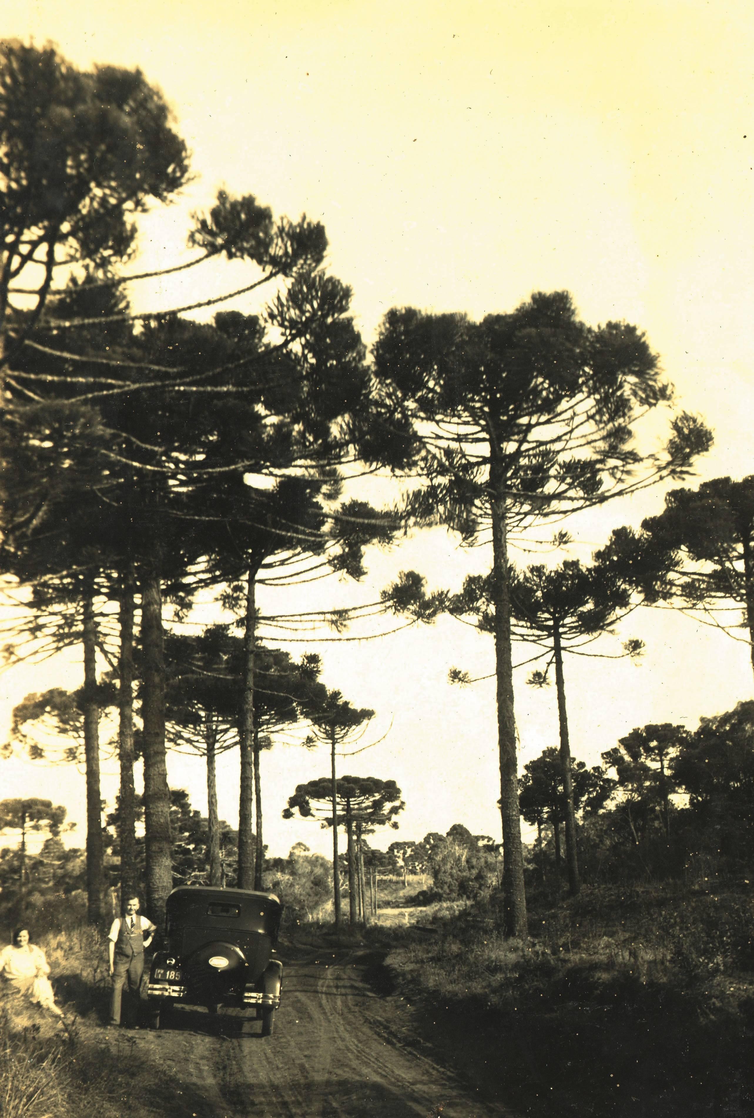 Pinheiros do Paraná, pelo fotógrafo argentino José Peón (1889-1972).