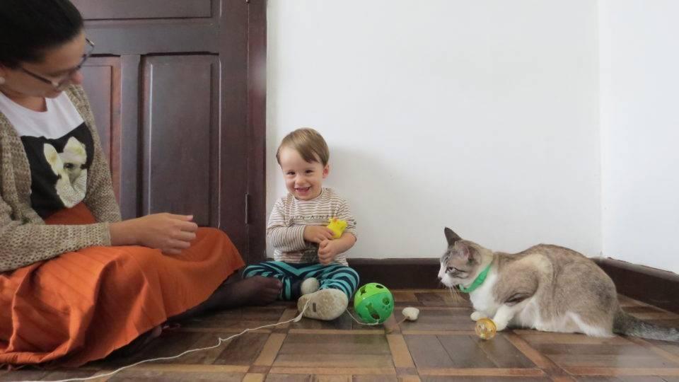 UFPR busca voluntários para estudo da transmissão do coronavírus em pets