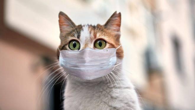 Após passar pelos exames de sorologia e PCR a gata teve a doença confirmada.