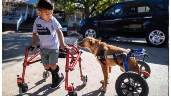 O projeto foi criado por Jamie Wallace-Griner depois de testemunhar o impacto de um cão na vida do filho que tem autismo