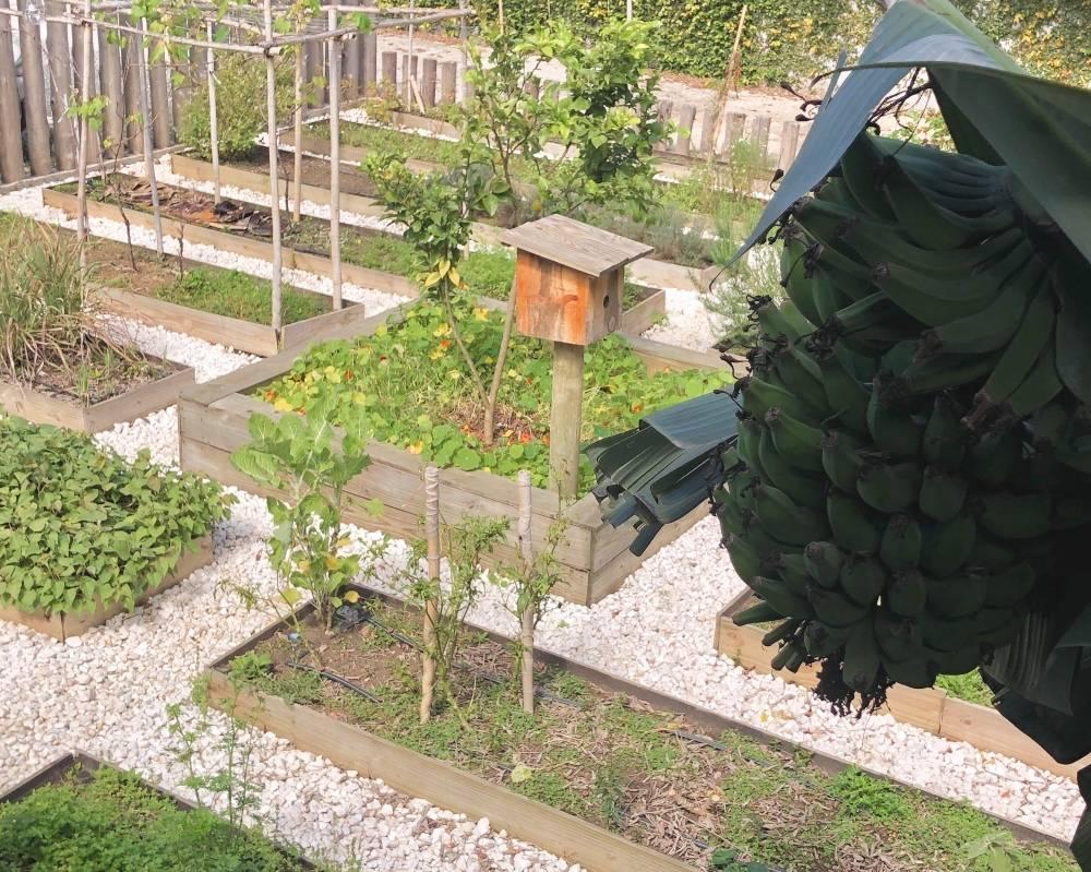 Hortas urbanas orgânicas são de onde vêm parte dos insumos do Aipo Superfoods. Foto: Leandro Ling/Divulgação.