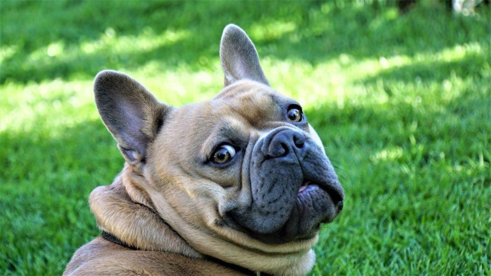Dois cães de Curitiba são os primeiros a testar positivo para coronavírus no país