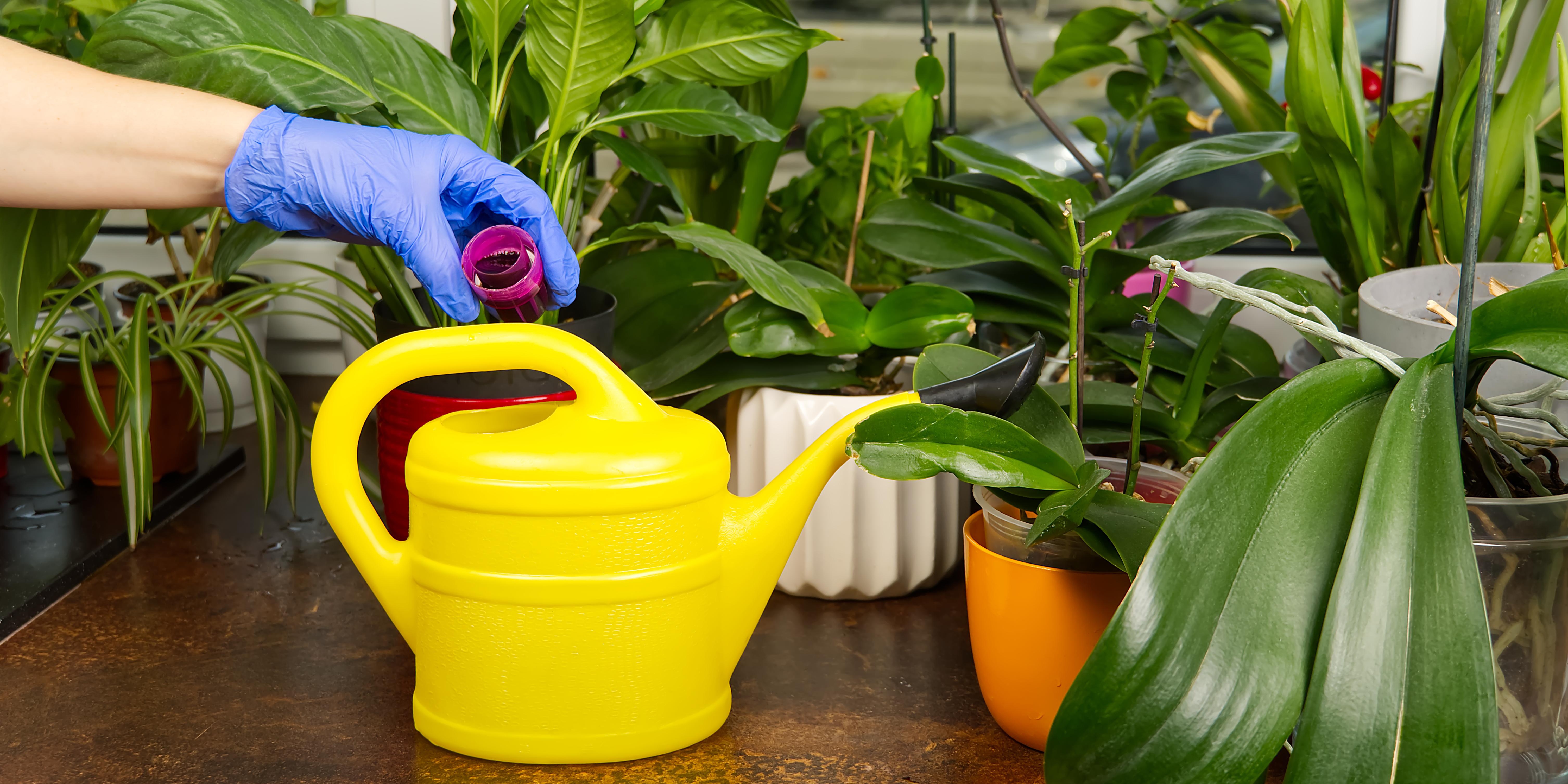 Rega das orquídeas é um dos principais cuidados com as plantas.