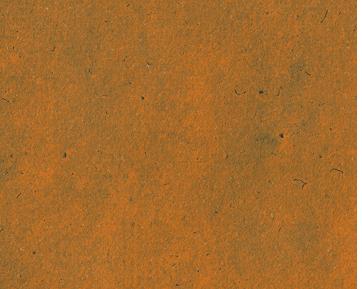 Ilustração Camelo