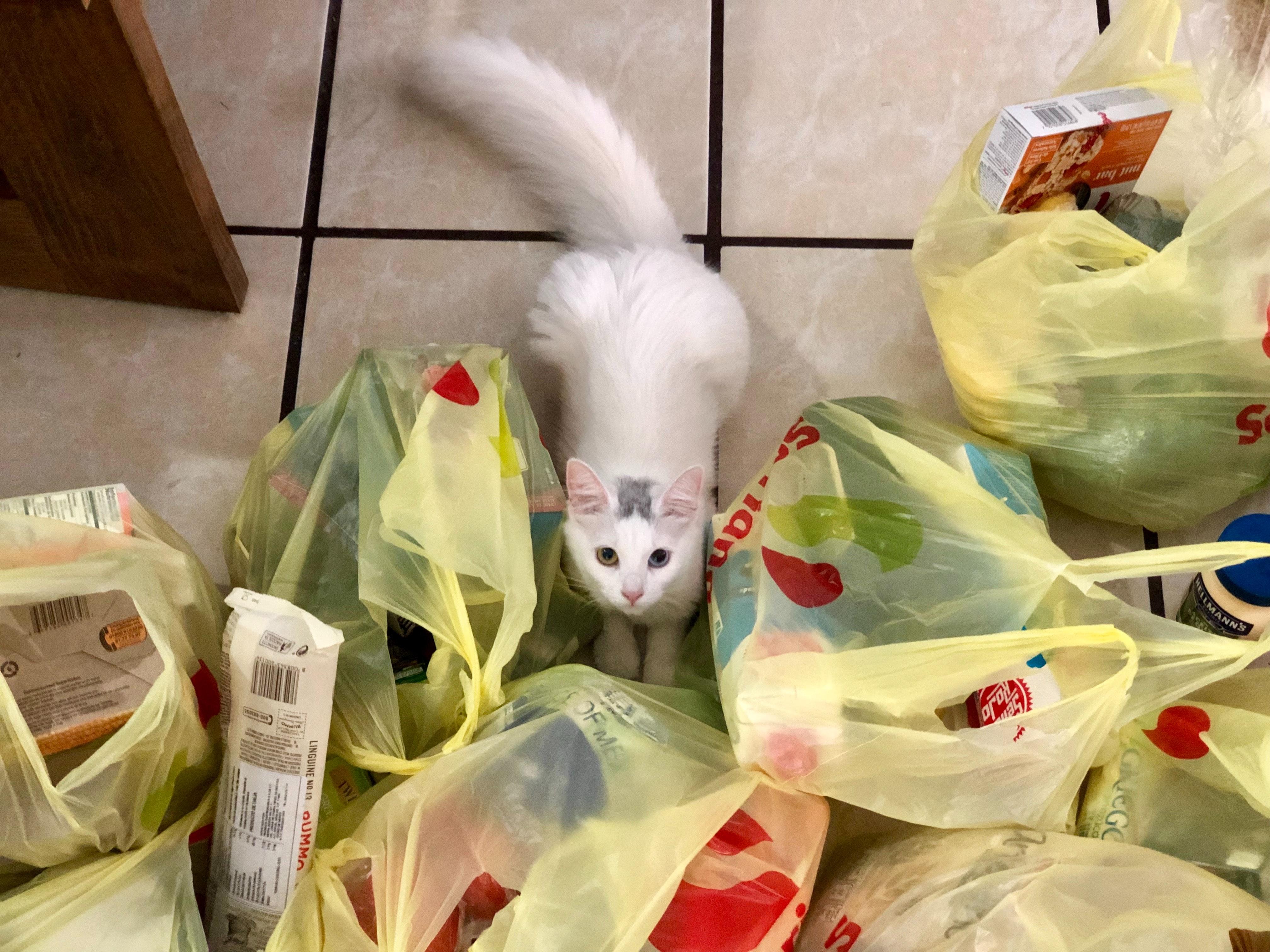 Todos os itens do supermercado necessitam de limpeza prévia antes de serem armazenados. Foto: Daniel Romero/Unsplash.