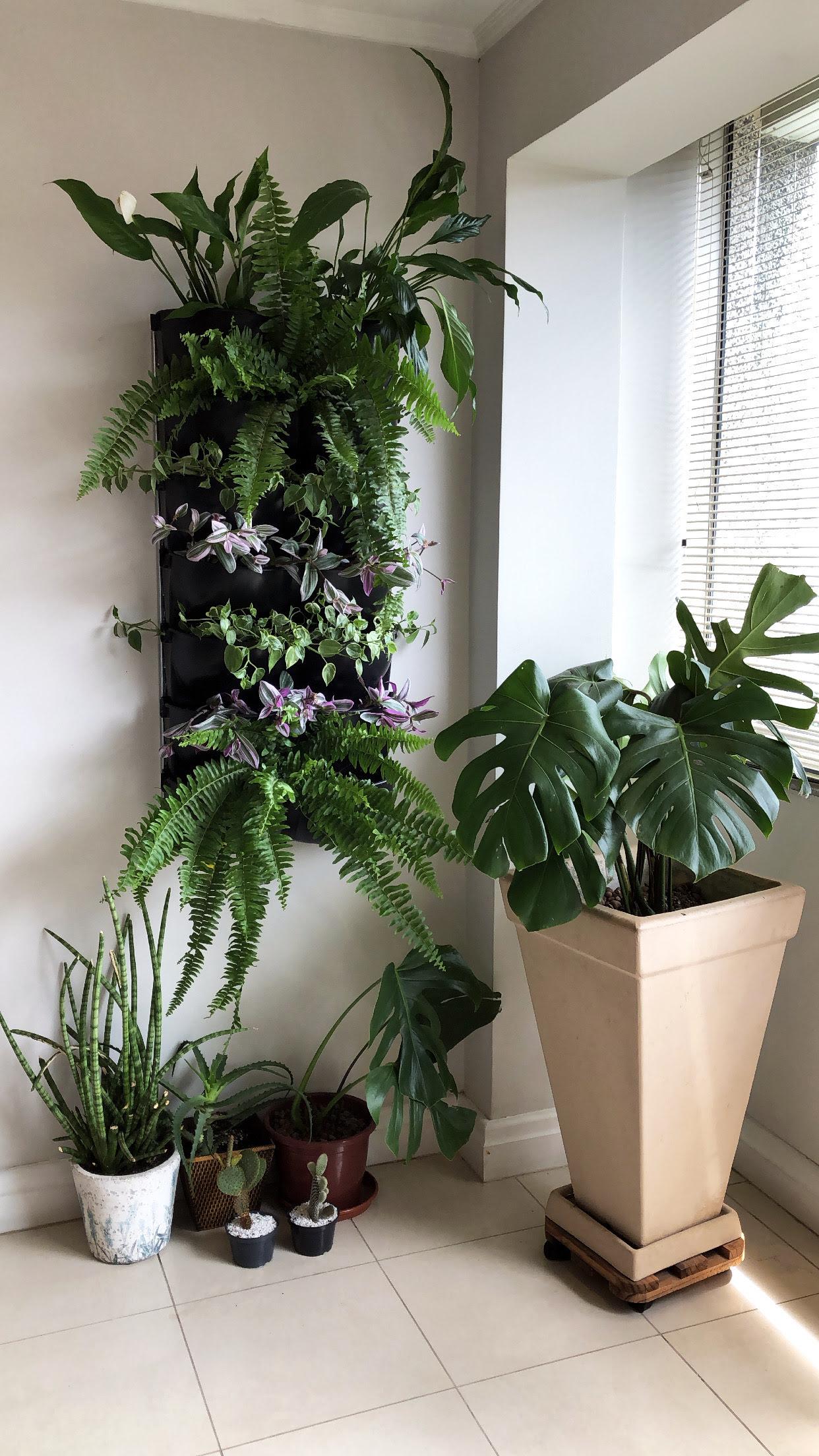 Em ambientes internos, samambaias são boas opções para jardim vertical. Foto: Divulgação/Ecotelhado.