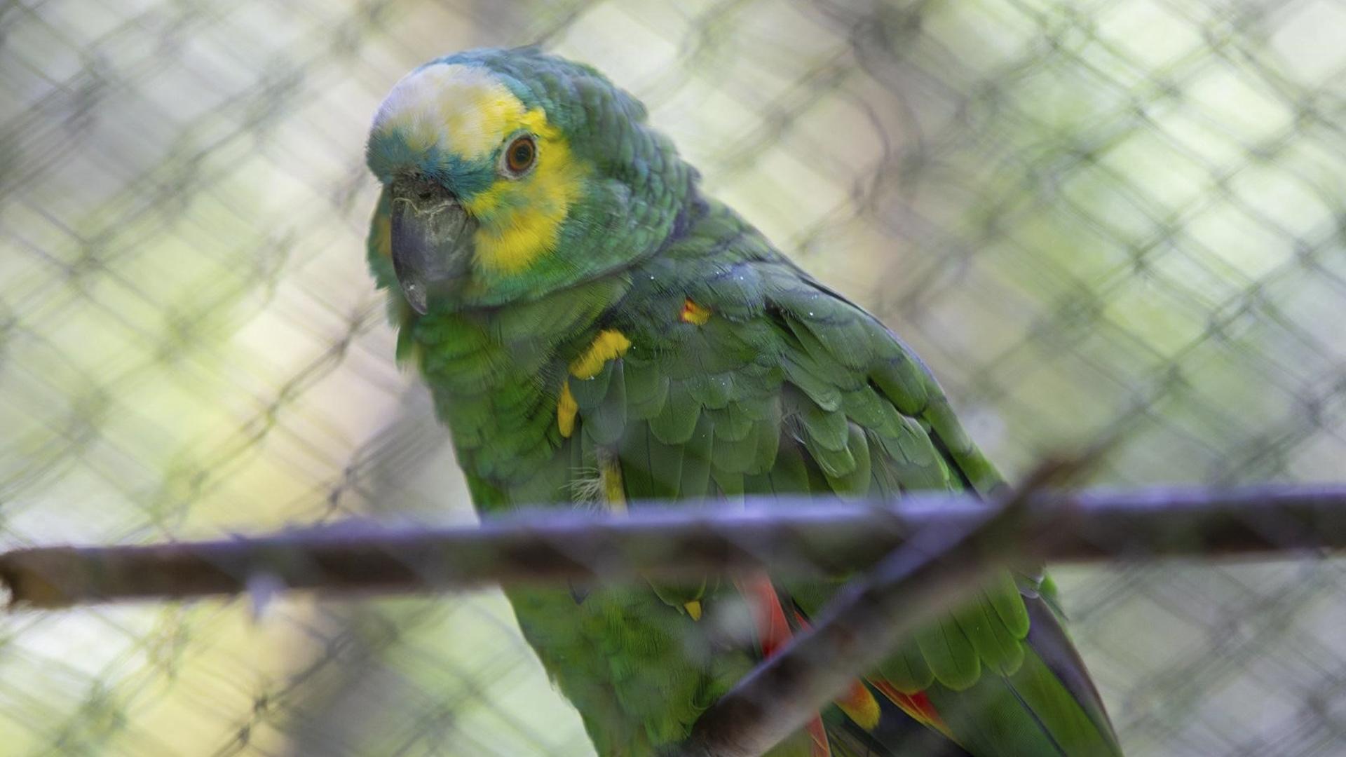 O local conta com uma equipe especializada que faz diversas atividades com os animais.
