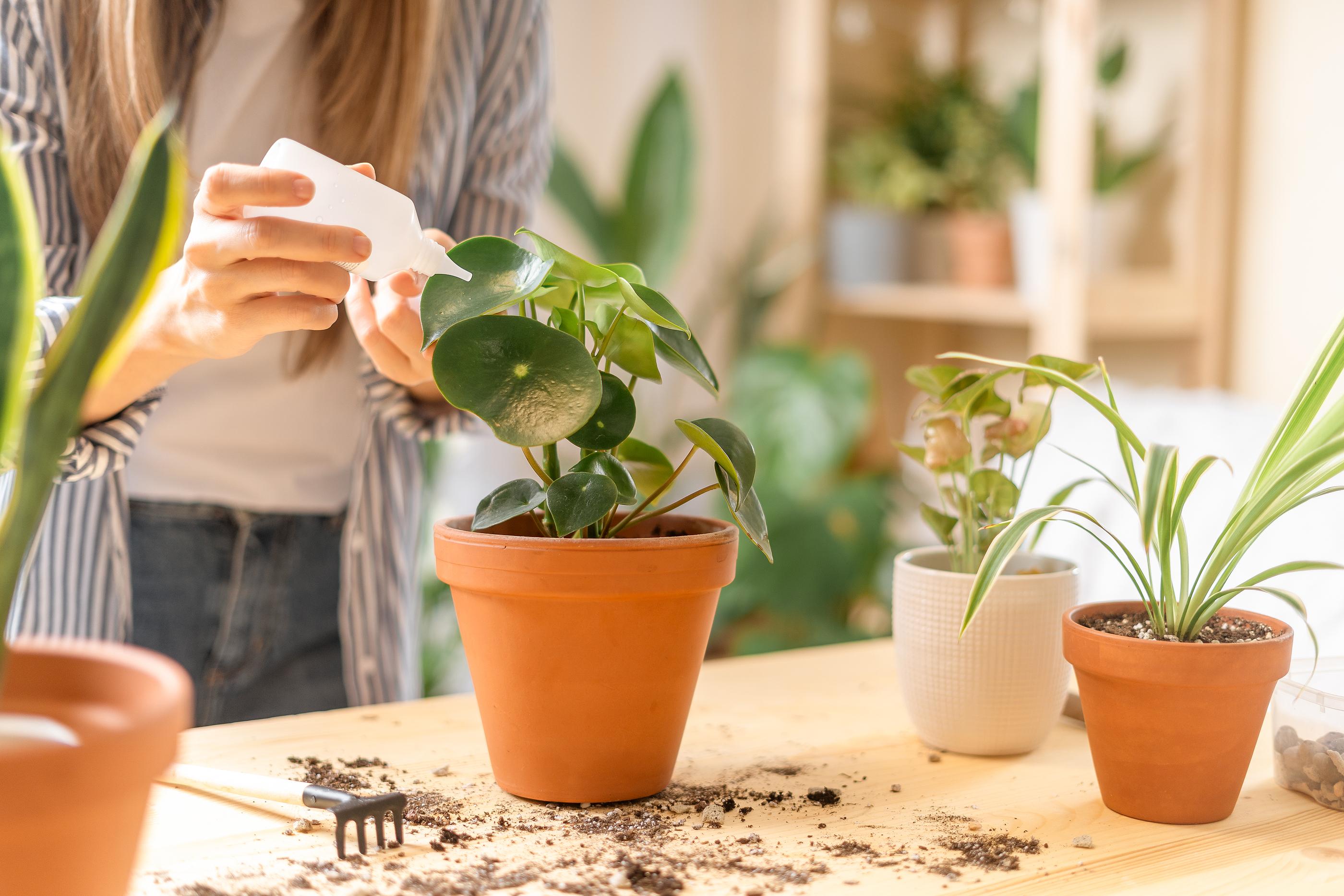 jardinagem-paisagismo-plantas-flores-horta-casa-apartamento-pucpr-curso-gratuito-online
