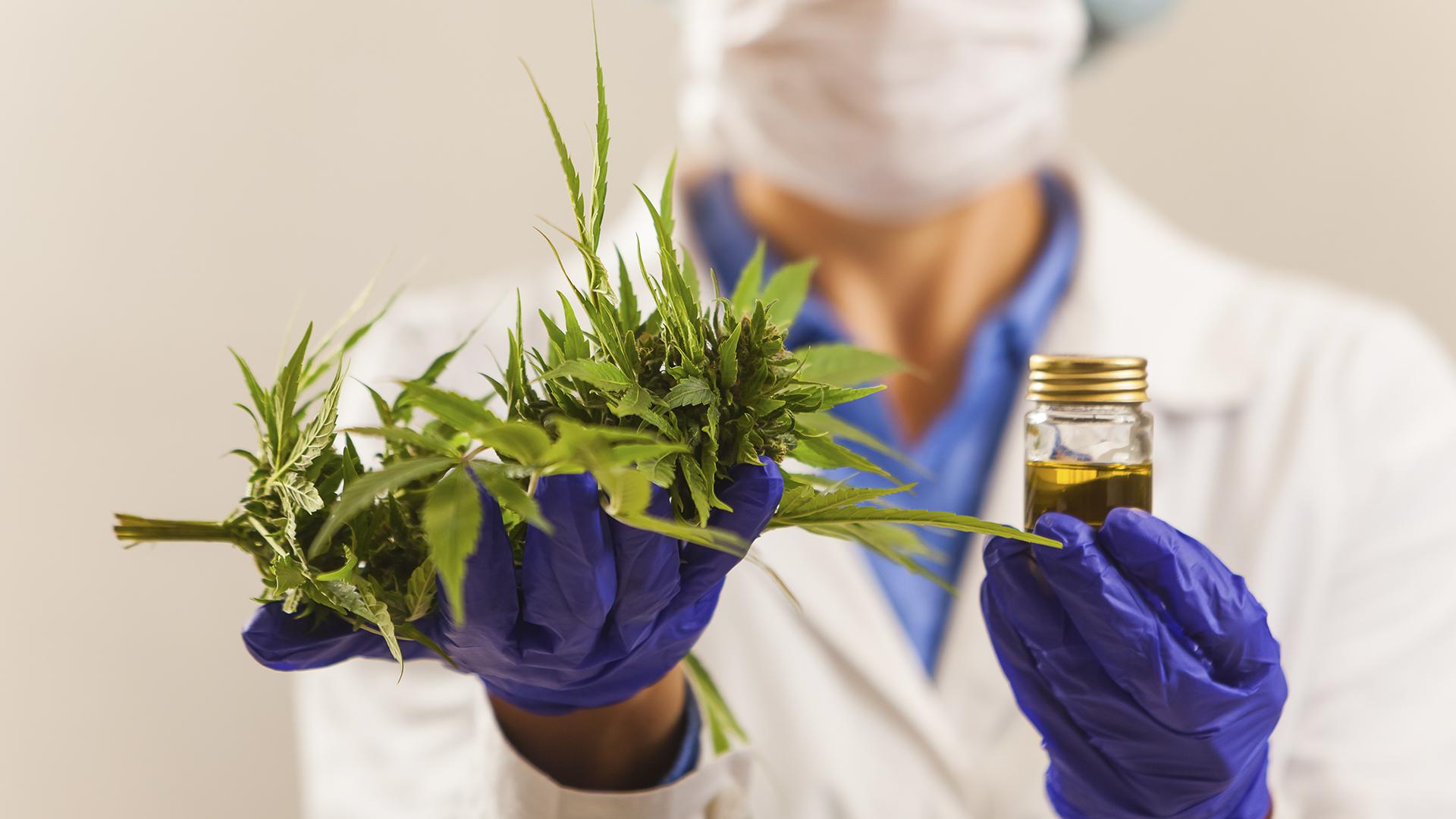 Setor de saúde vem ampliando as descobertas sobre o potencial da Cannabis Sativa no tratamento de diversos tipos de enfermidades.