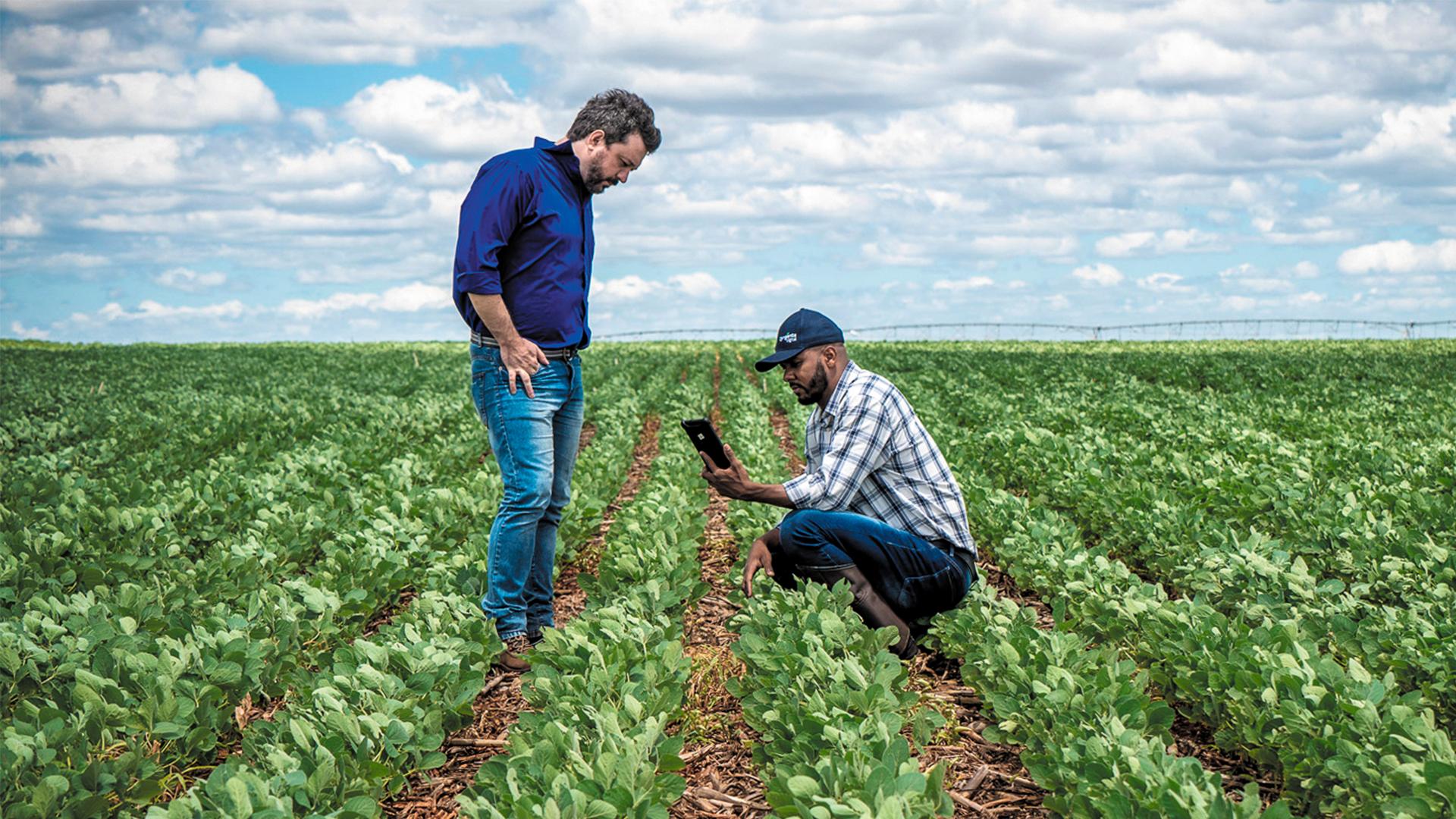 Oferta Controle Certo presta apoio técnico a agricultores sem equipes especializadas