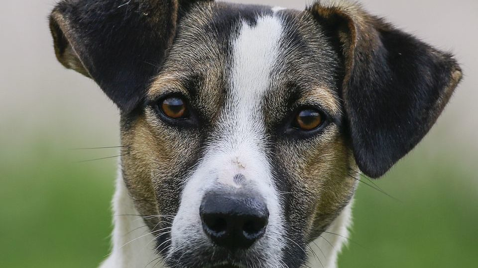 Pesquisa da UFPR mostra que alguns donos passam Covid para seus pets