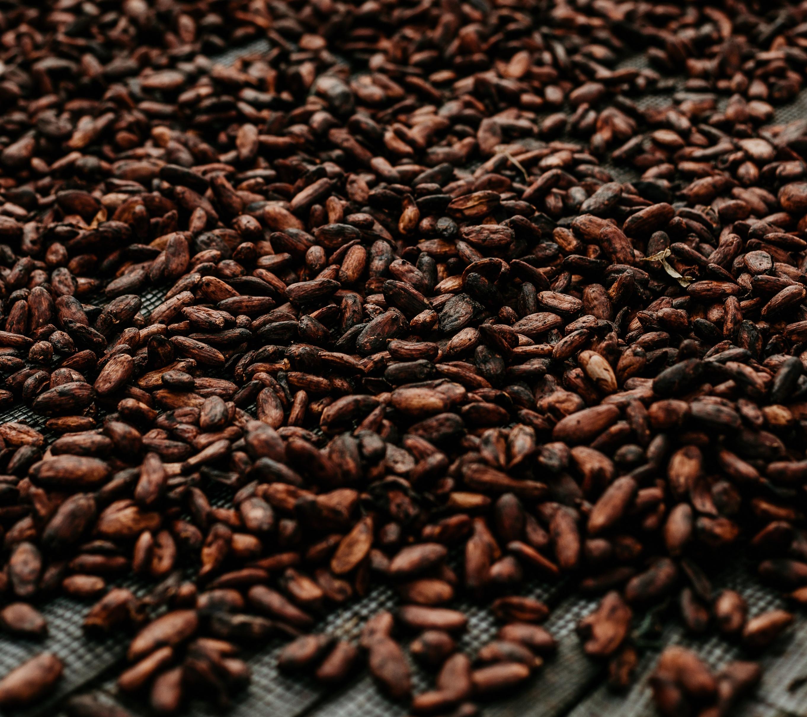 Na tendência Bean to Bar, as amêndoas do cacau são utilizadas na íntegra. Foto: Loannes Marc/Pexels.