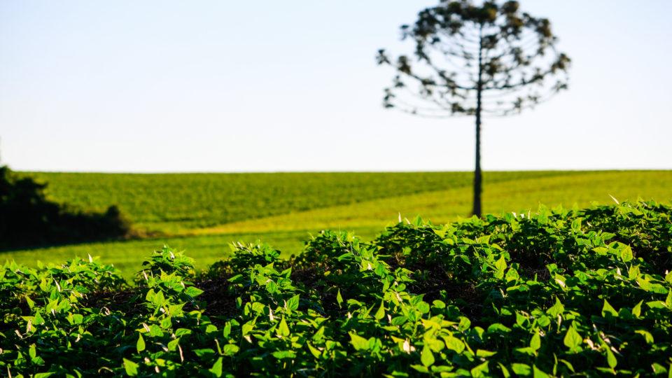 Quanto custa o hectare de terra no Paraná? Veja os preços médios por município