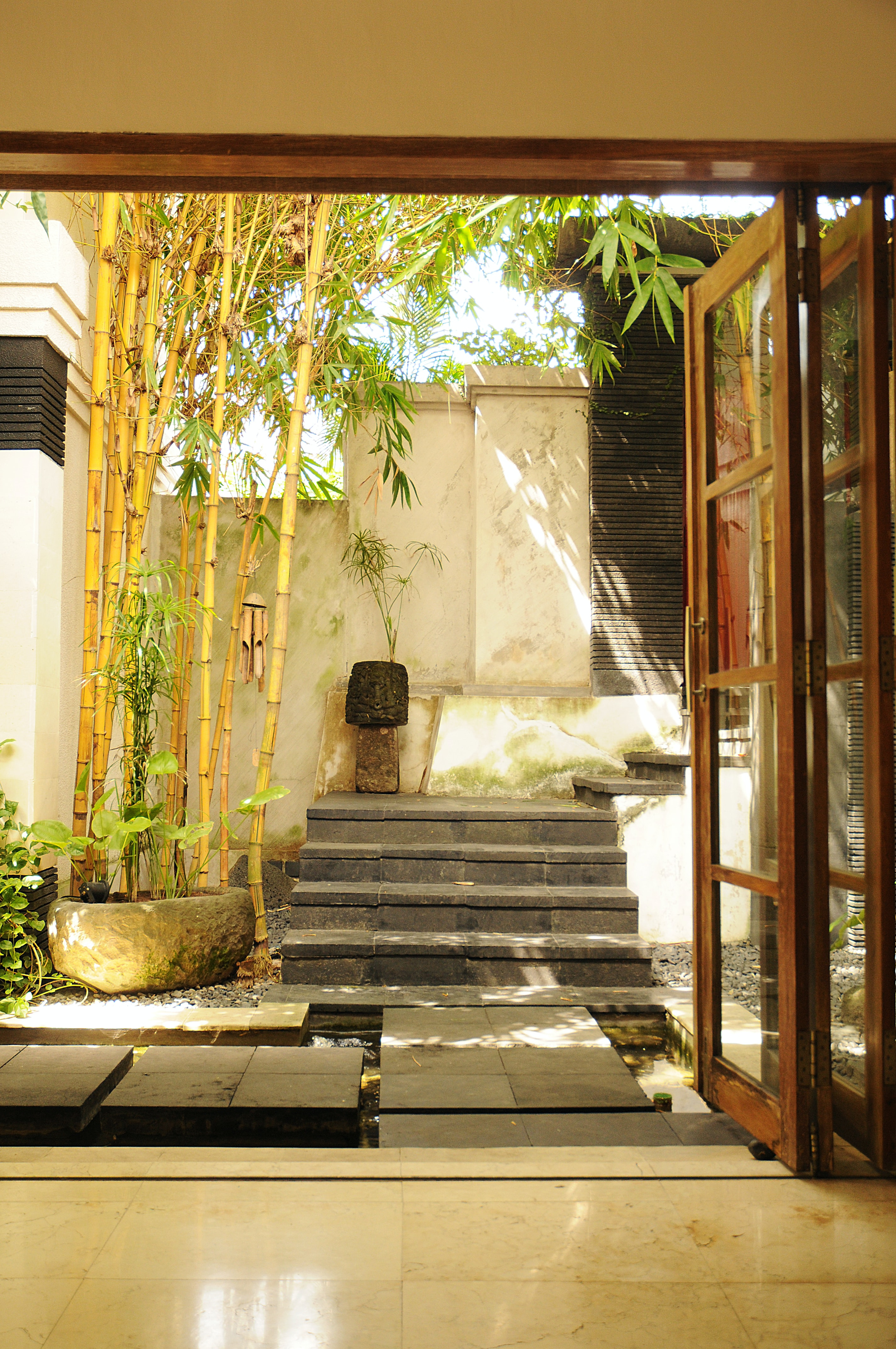 Bambu precisa de muito sol para se desenvolver.