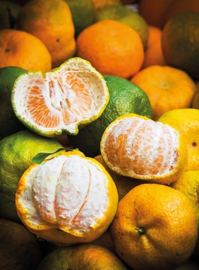 A ponkan é mais comum das tangerinas: tem a casca mais grossa e é adocicada.