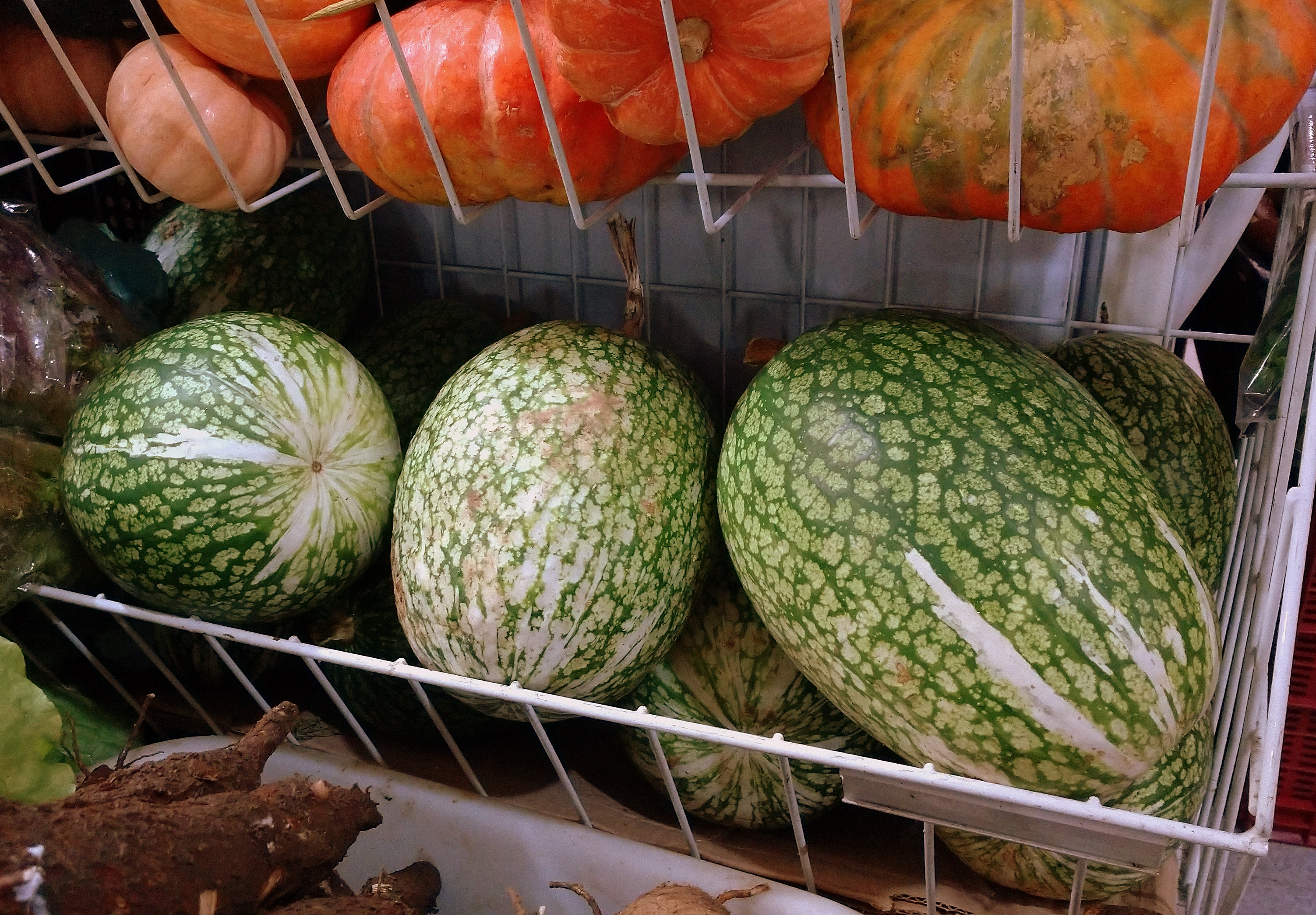 As gilas (primas da abóbora, mas com jeito de melancia) na prateleira da banca da Dona Isabel, no Mercado Municipal.