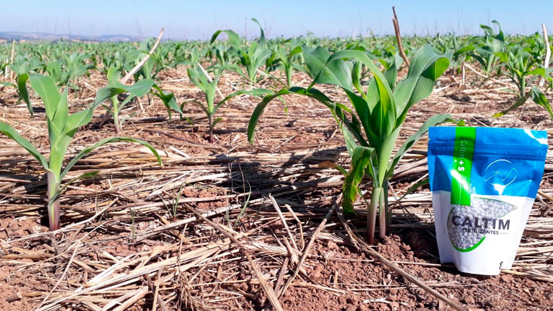 Agronegócio brasileiro deve crescer 20% até 2030. Plantação em Camargo – Rio Grande do Sul
