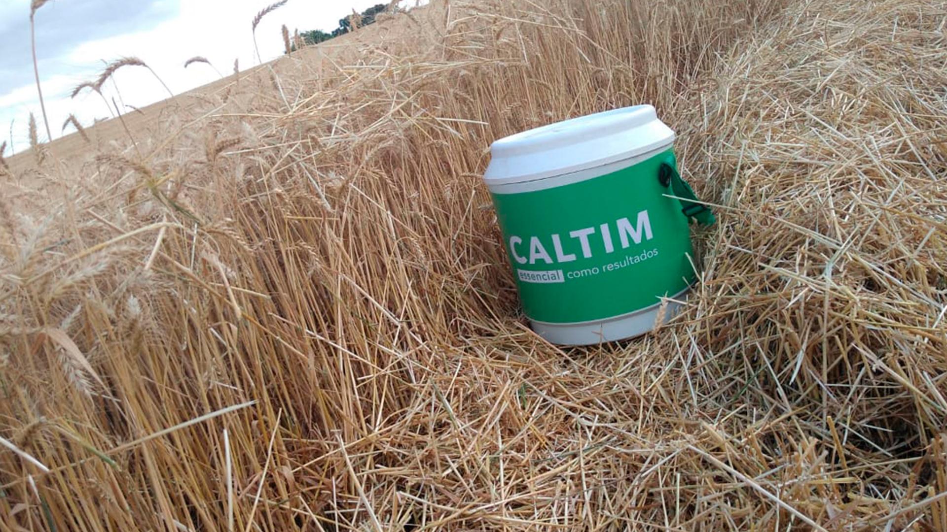 Caltim Fertilizantes inova nos macronutrientes secundários, essenciais na agricultura. Plantação de trigo em Sananduva – Rio Grande do Sul