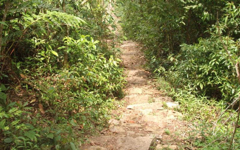 Imagem da trilha do Morro do Canal. Um caminho de terra rodeado por mata verde.