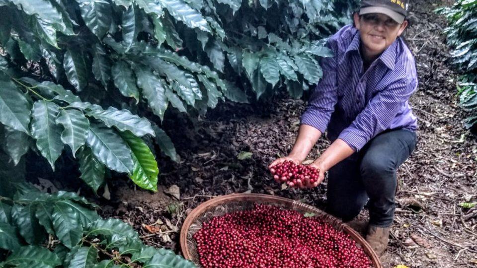 """Pelas mãos """"delas"""", café do Paraná se destaca pela qualidade em vez da quantidade"""