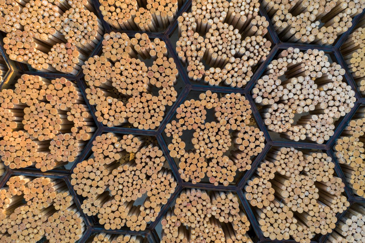 Detalhe estrutural do pavilhão nos Estados Unidos, que explora ao mesmo tempo formas orgânicas e geométricas da madeira.