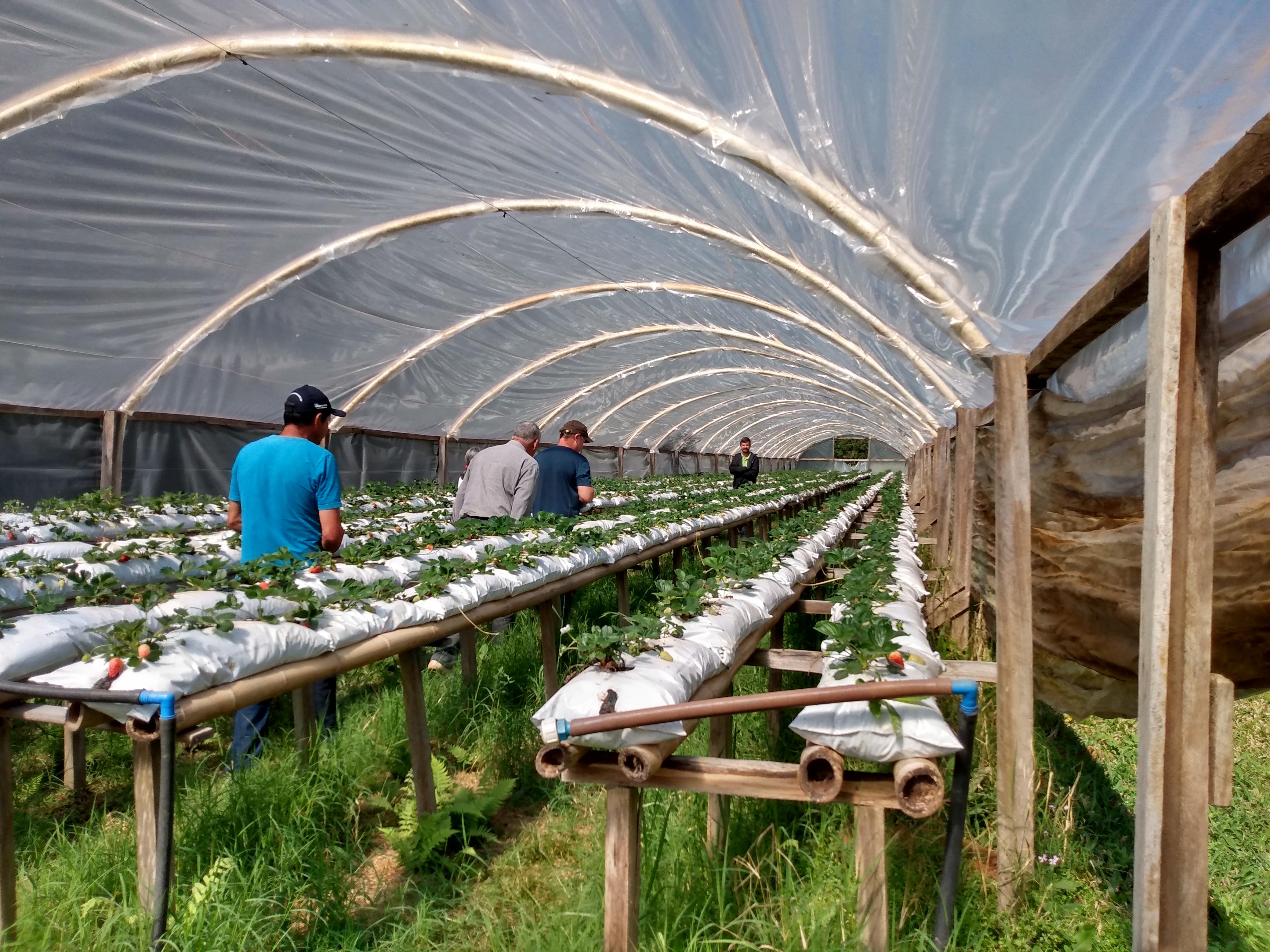 Agricultores da região de Castro estão entre os que participam do programa Compra Direta