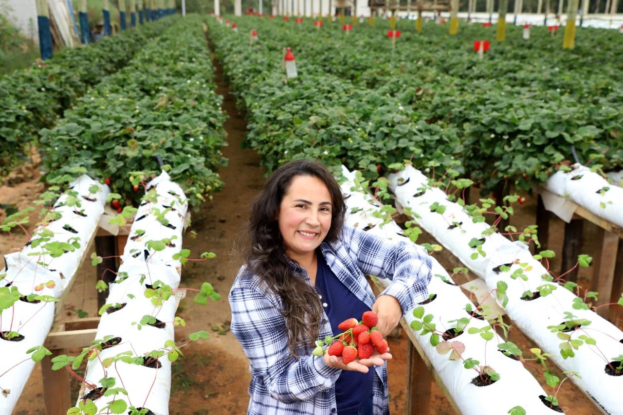 Rosana trocou o trabalho de confeiteira na cidade para cultivar morangos no campo. (Ari Dias).
