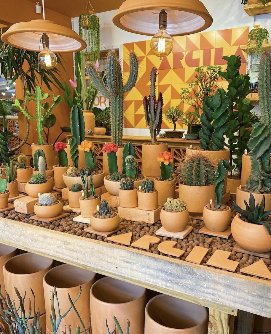 plantas e flores em curitiba