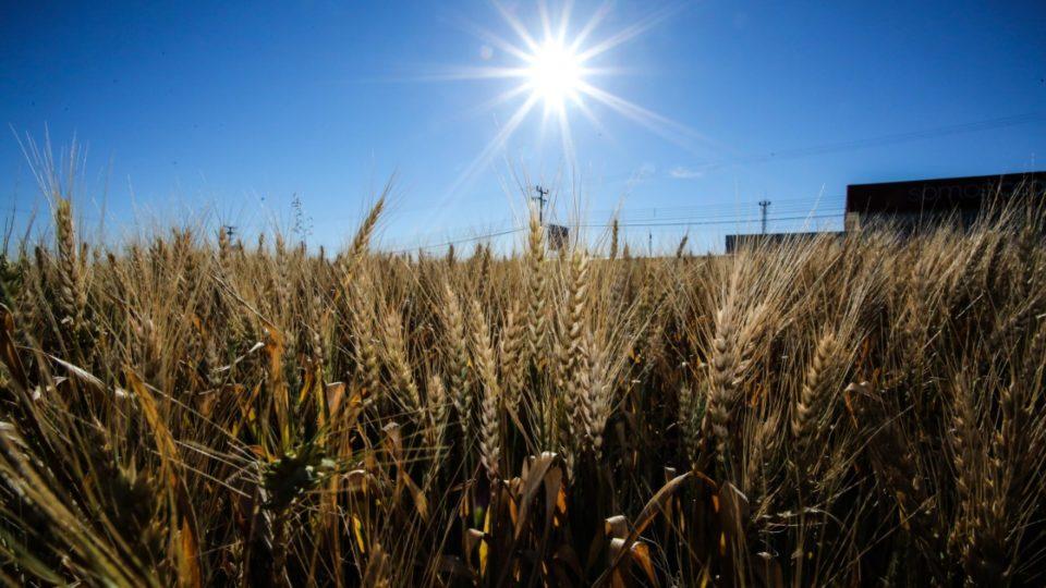 """Potência agrícola, PR ainda não esgotou """"fronteiras"""" para produzir mais alimentos"""