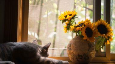 Dicas de cuidados e três espécies de flores fáceis de cultivar dentro de casa