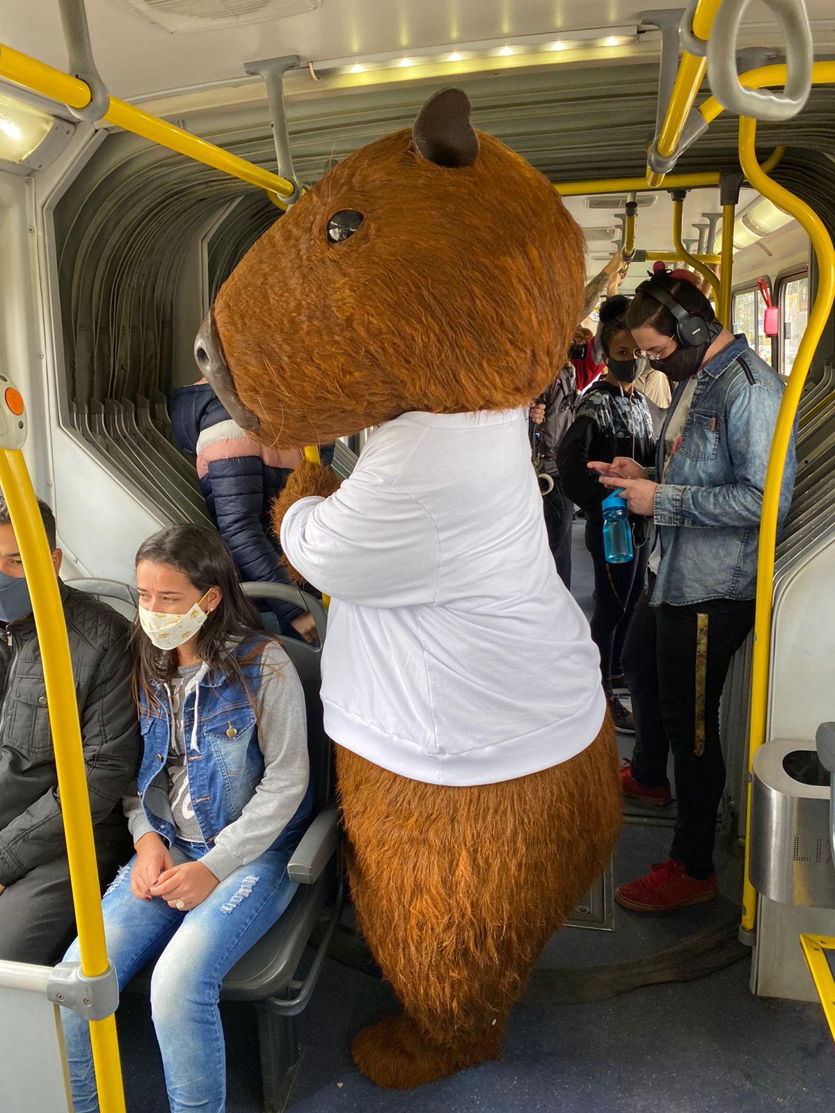 capivara dentro do ônibus metropolitano