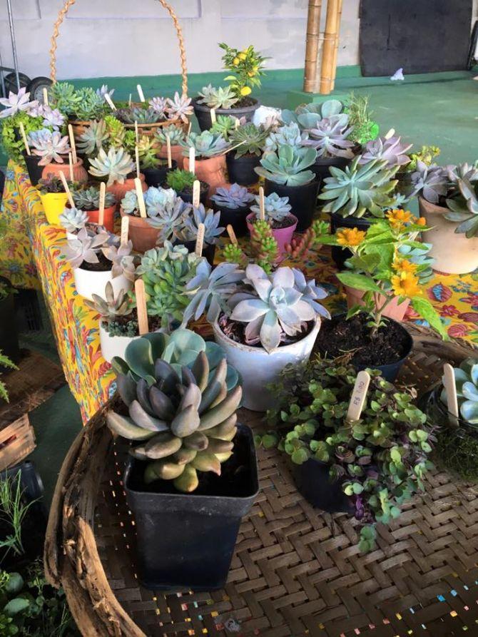 A Feira de Orgânicos também conta com flores e plantas ornamentais. Foto: Divulgação.