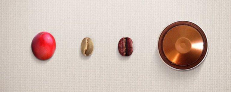 Do pé à cápsula: o percurso do café até chegar à xícara