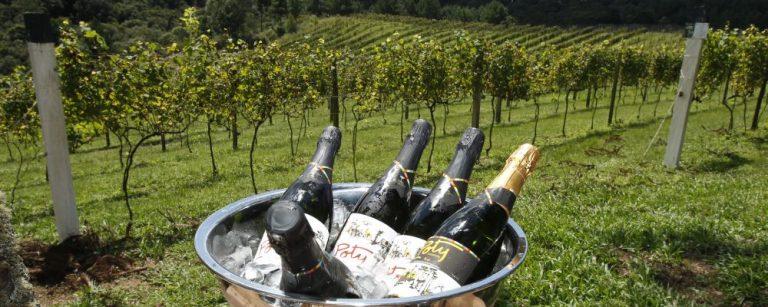 Evento Gastronomade na vinicola Auraucaria em São José dos Pinhais