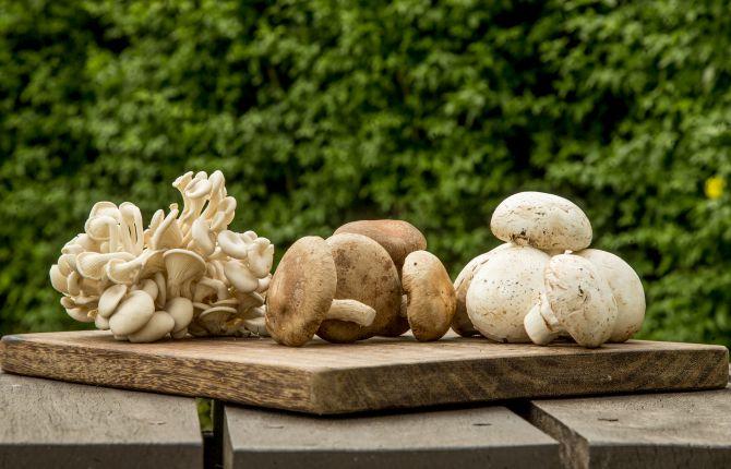 Da esquerda para a direita: cogumelo shimeji, shiitake e Paris. Foto: Hugo Harada/Gazeta do Povo